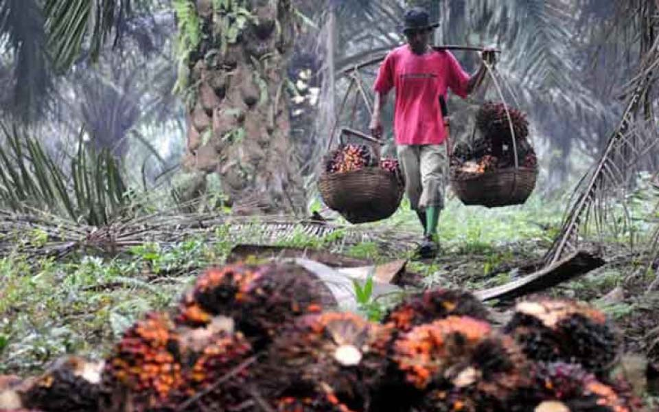 Plantation worker carries bundles of palm oil fruit (Republika)