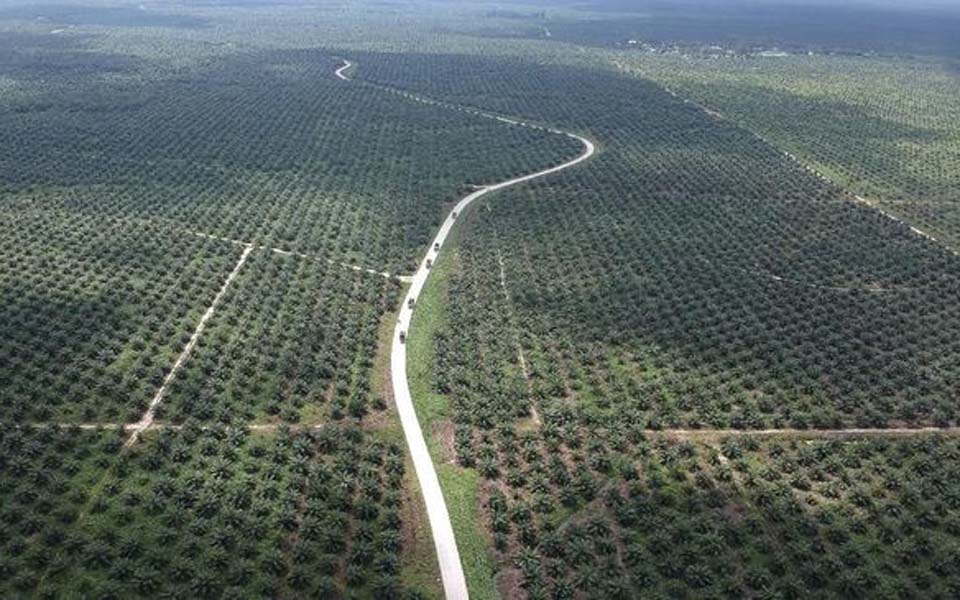 View of palm oil plantation from the air (Antara)